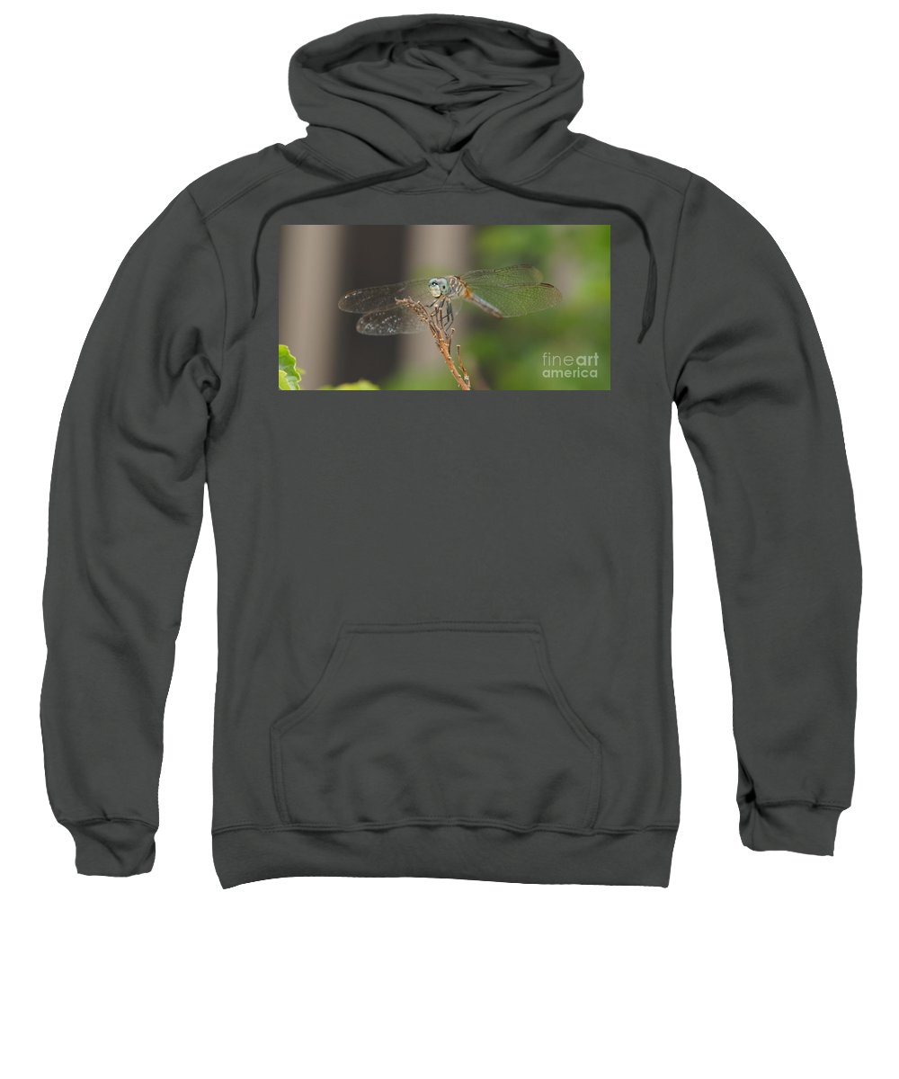 Dragonfly Sweatshirt featuring the photograph Dragonfly by Megan Cohen