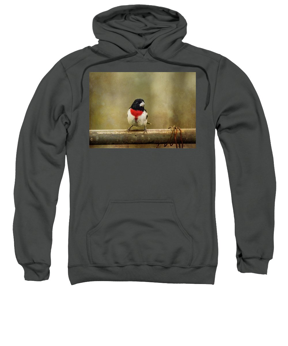 Rose-breasted Grosbeak Sweatshirt featuring the photograph Dressed In My Best by Susan Capuano