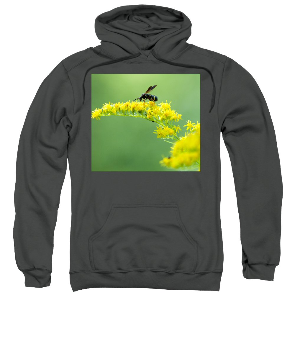 Optical Playground By Mp Ray Sweatshirt featuring the photograph Drinking Up Flower Nectar by Optical Playground By MP Ray