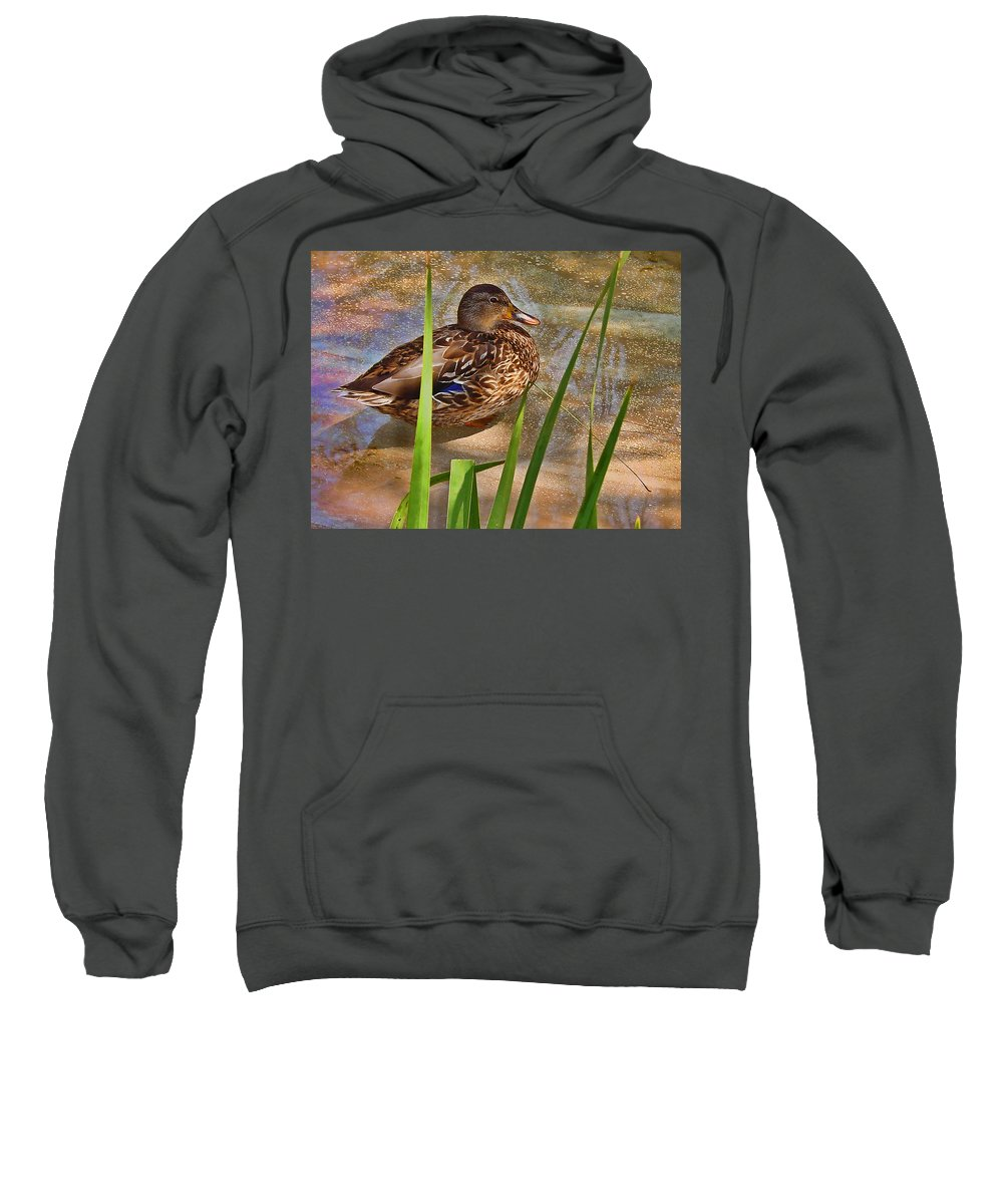 Duck Sweatshirt featuring the photograph Duck by Guillermo Rodriguez