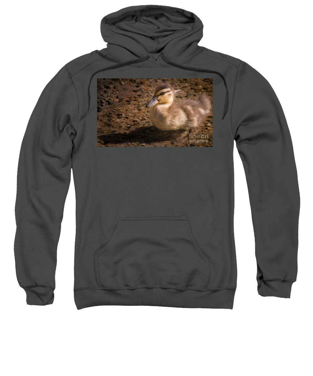 Duck Sweatshirt featuring the photograph Duckling by Andrea Goodrich