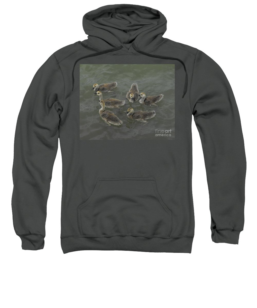Ducks Sweatshirt featuring the photograph Ducklings by Brandi Maher
