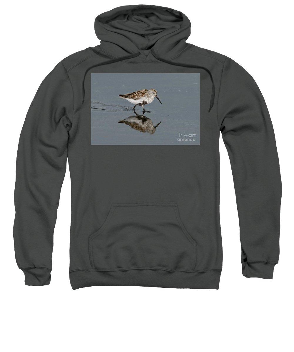 Dunlin Sweatshirts