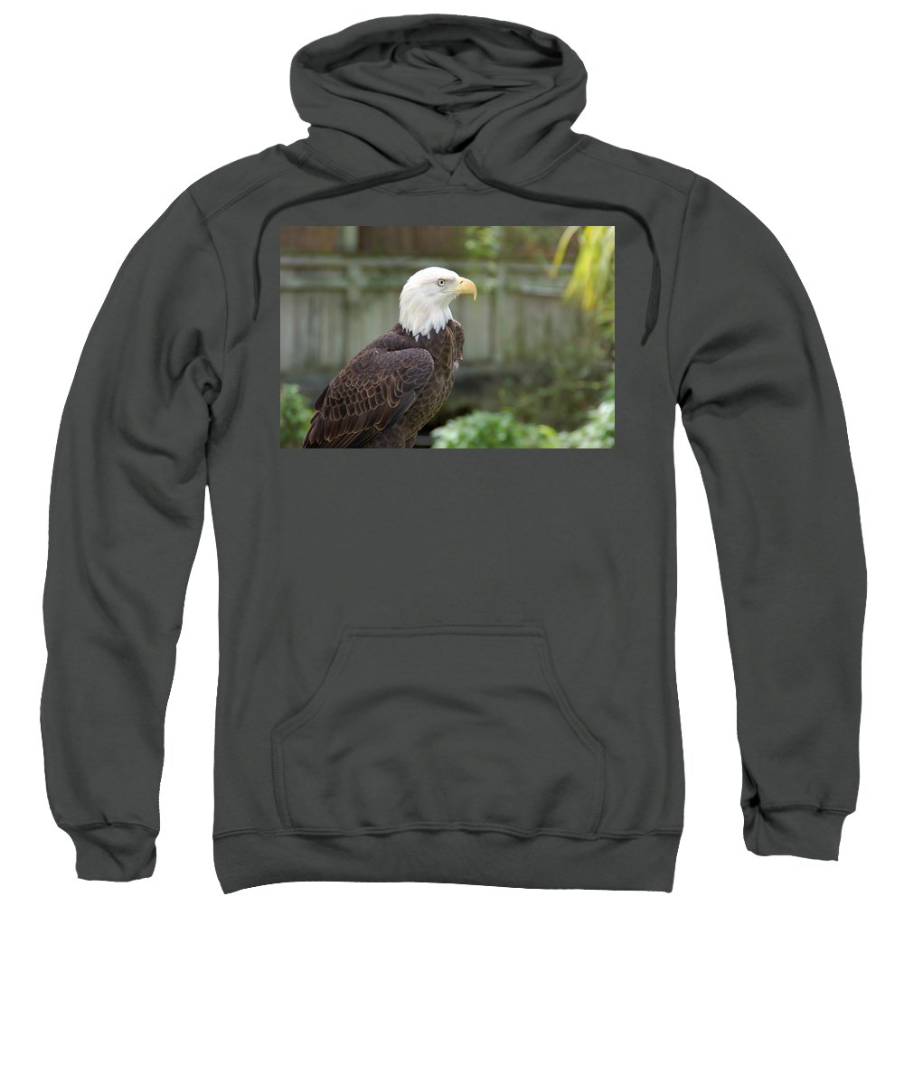Eagle Sweatshirt featuring the photograph Eagle 2 by Aimee L Maher ALM GALLERY