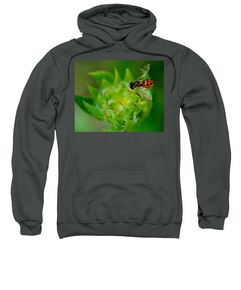 Early Sweatshirt featuring the photograph Early Arrival by Frozen in Time Fine Art Photography