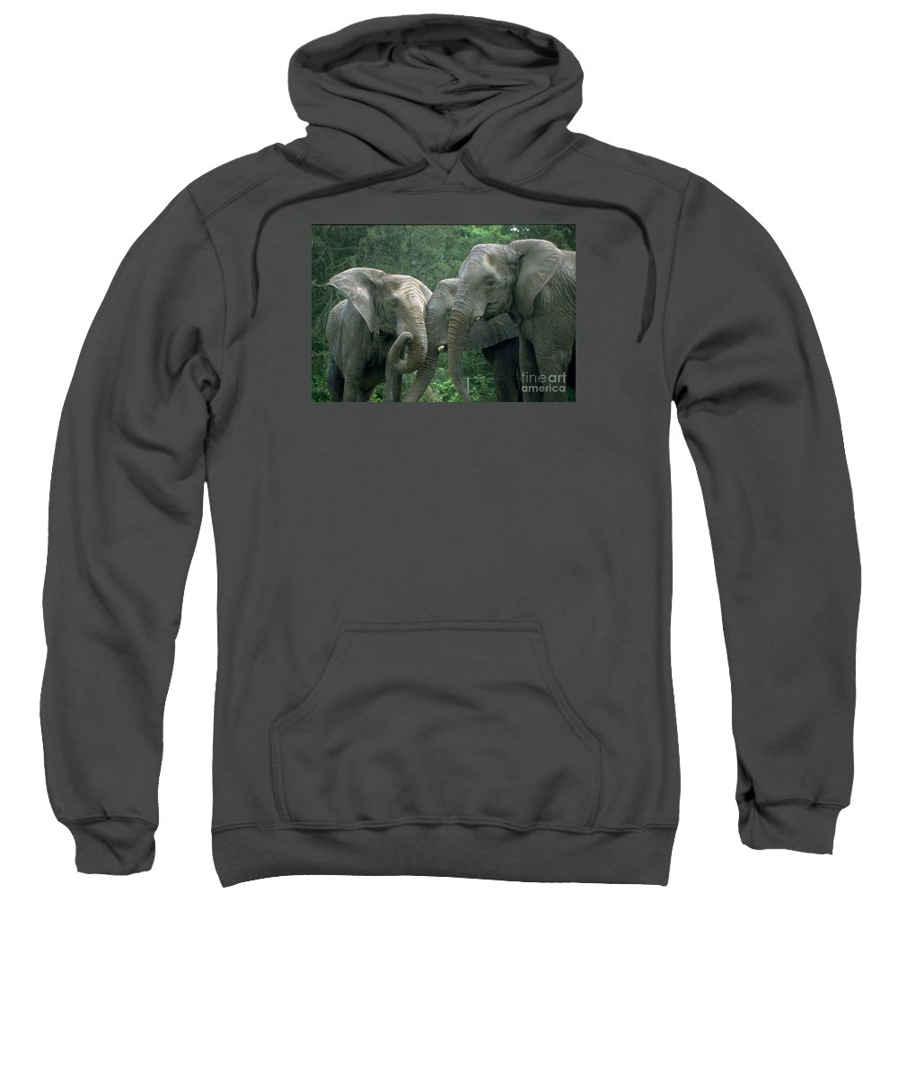 Elaphant Sweatshirt featuring the photograph Elephant Ladies by Gary Gingrich Galleries