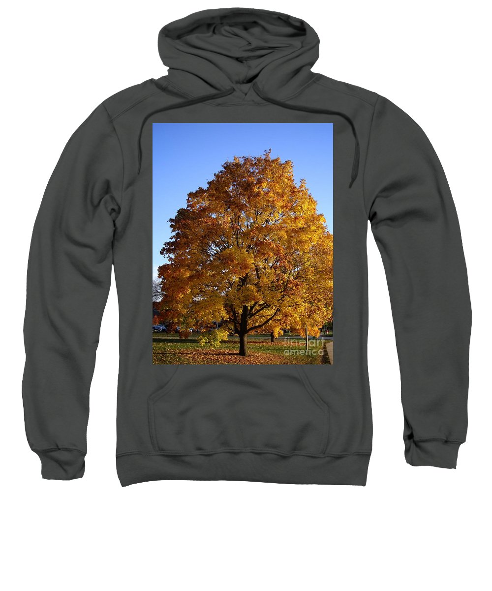 .tree.leaves Sweatshirt featuring the photograph Engineering by Joseph Yarbrough