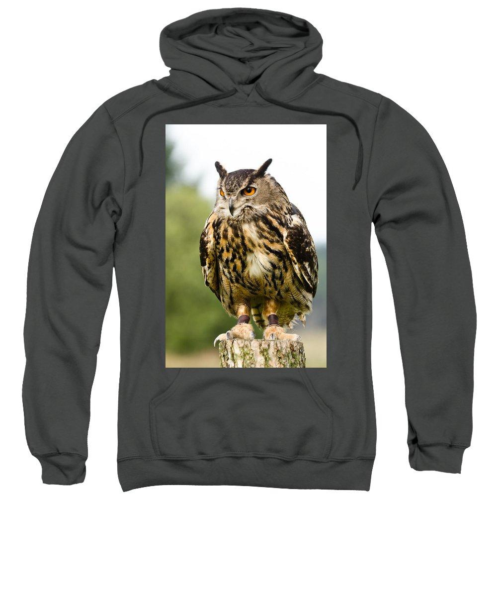 Beak Sweatshirt featuring the photograph Eurasian Eagle Owl On Log by David Head