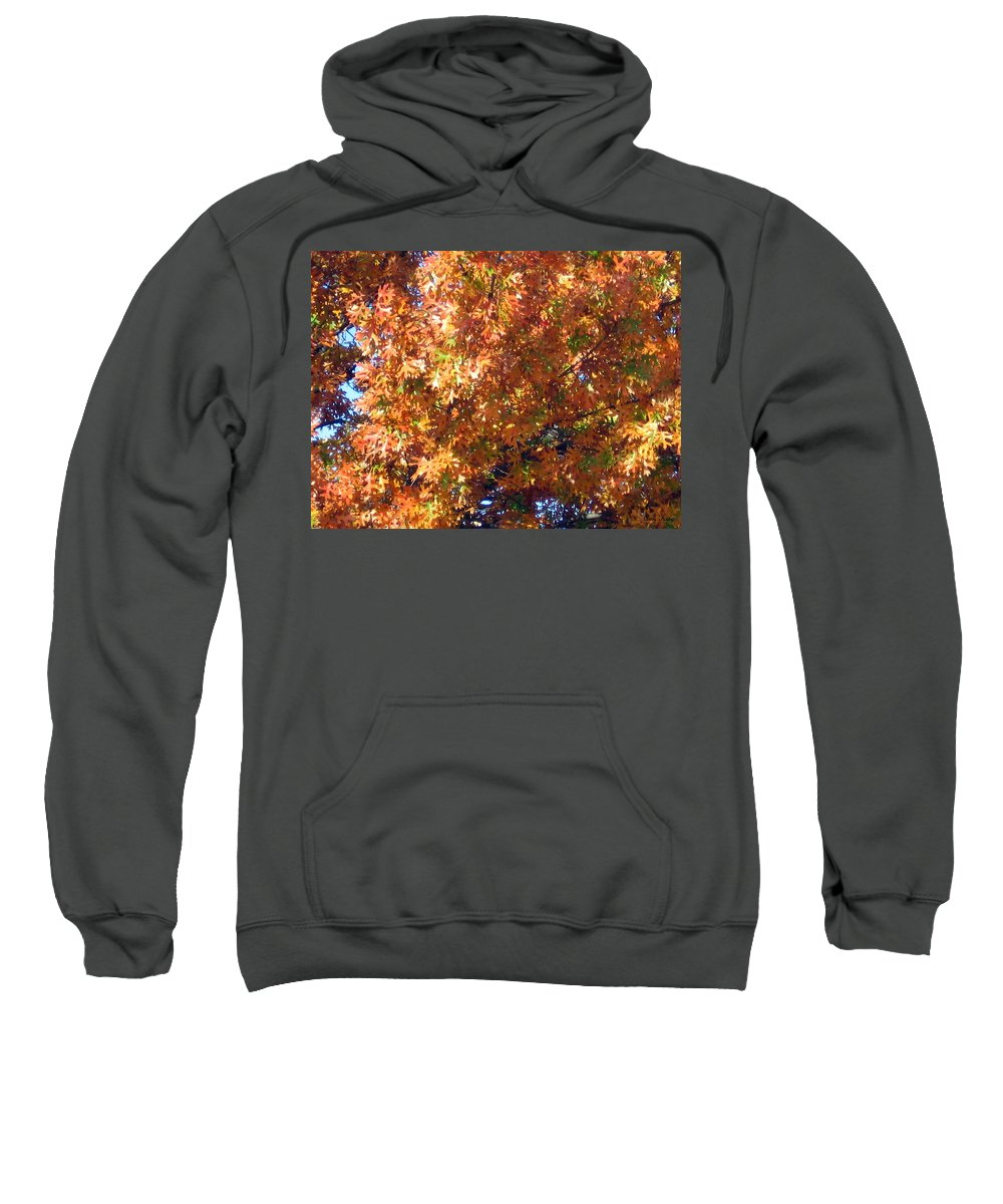 Tree Sweatshirt featuring the photograph Fall by Amy Hosp