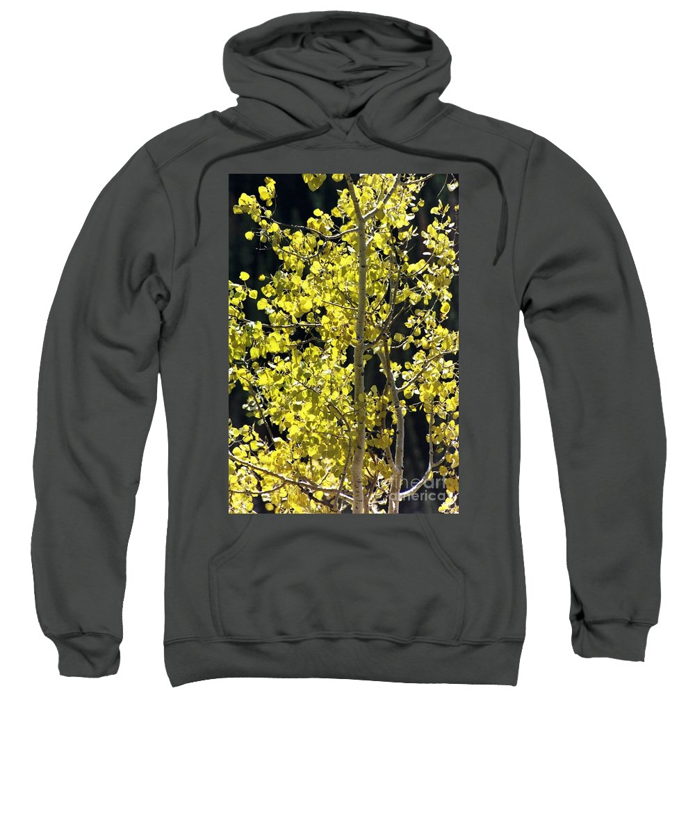 Aspens Sweatshirt featuring the photograph Fall by Brandi Maher
