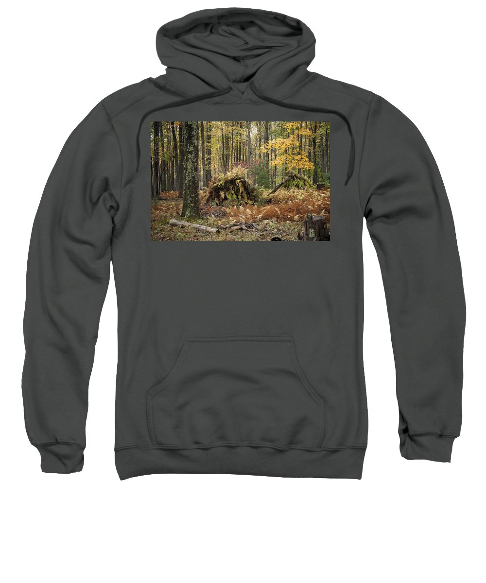 Fall Sweatshirt featuring the photograph Fall Color by Crystal Harman
