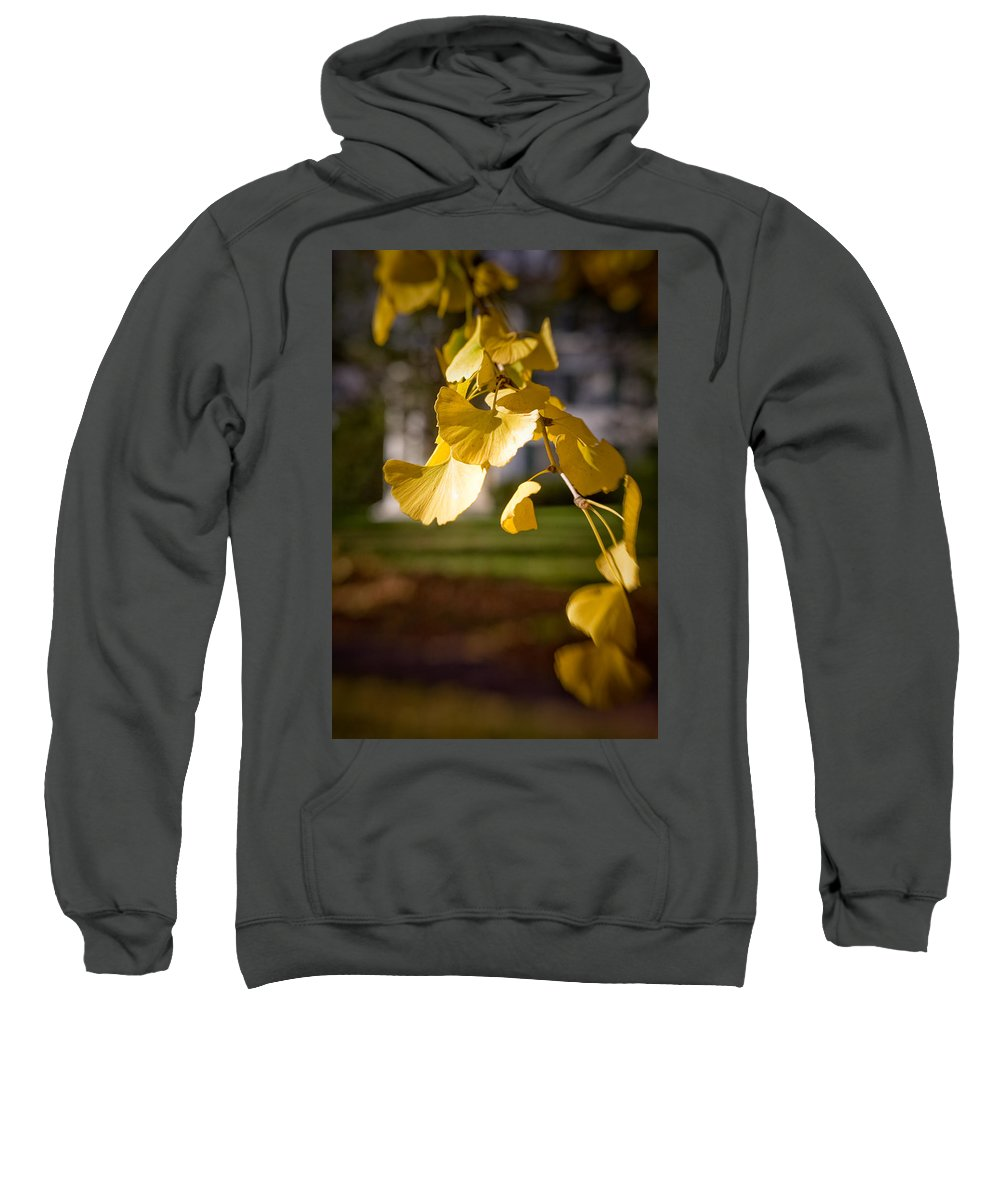 Color Sweatshirt featuring the photograph Fall Colors 6737 by Timothy Bischoff