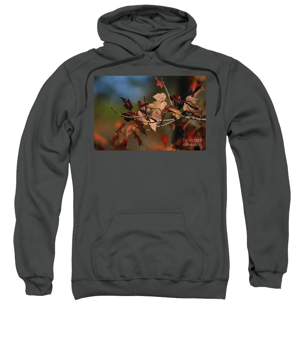 Autumn Sweatshirt featuring the photograph Fall Colors by Karol Livote