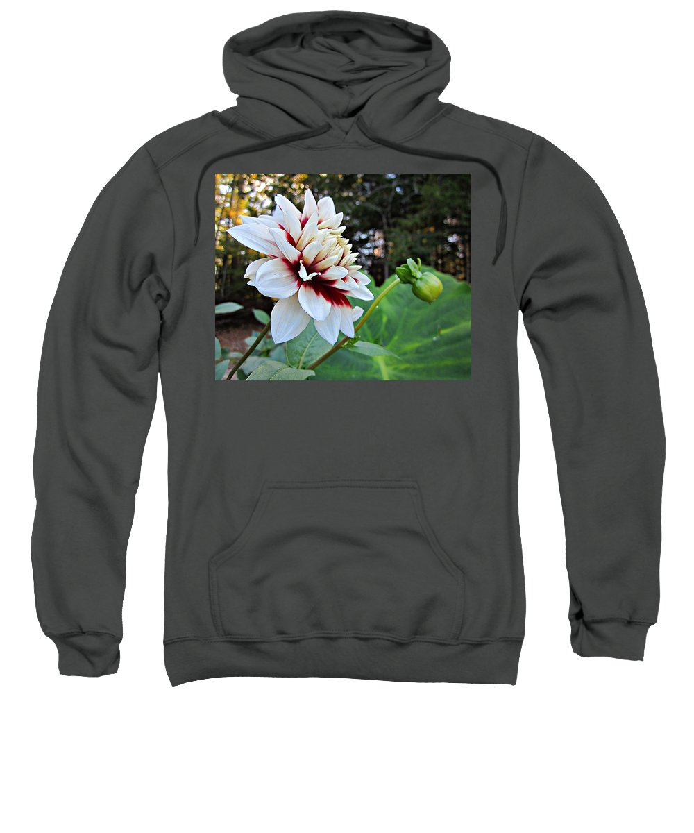 Sweatshirt featuring the photograph Fall Dahlia by MTBobbins Photography