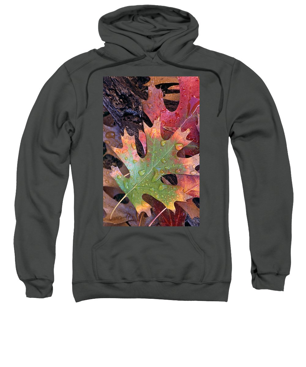 Leaves Sweatshirt featuring the photograph Fall Leaves I V by Jim Smith