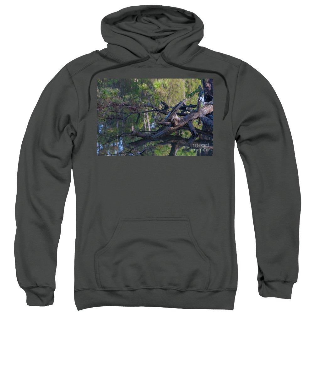 Dead Wood Sweatshirt featuring the photograph Fallen Angel by Dale Powell
