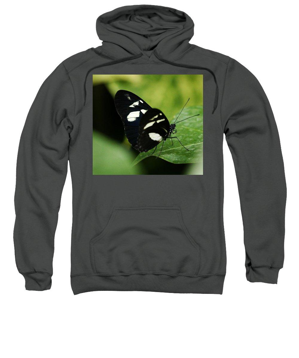 Butterfly Sweatshirt featuring the photograph False Zebra Longwing Butterfly by Marilyn Hunt