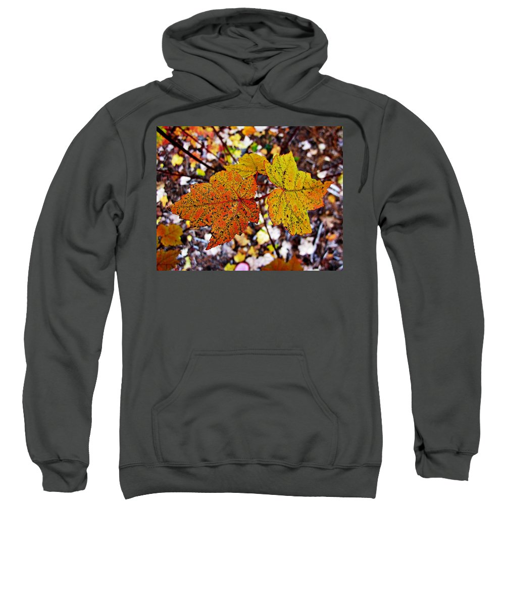 Maple Leaves Sweatshirt featuring the photograph Fancy Fall Leaves by MTBobbins Photography