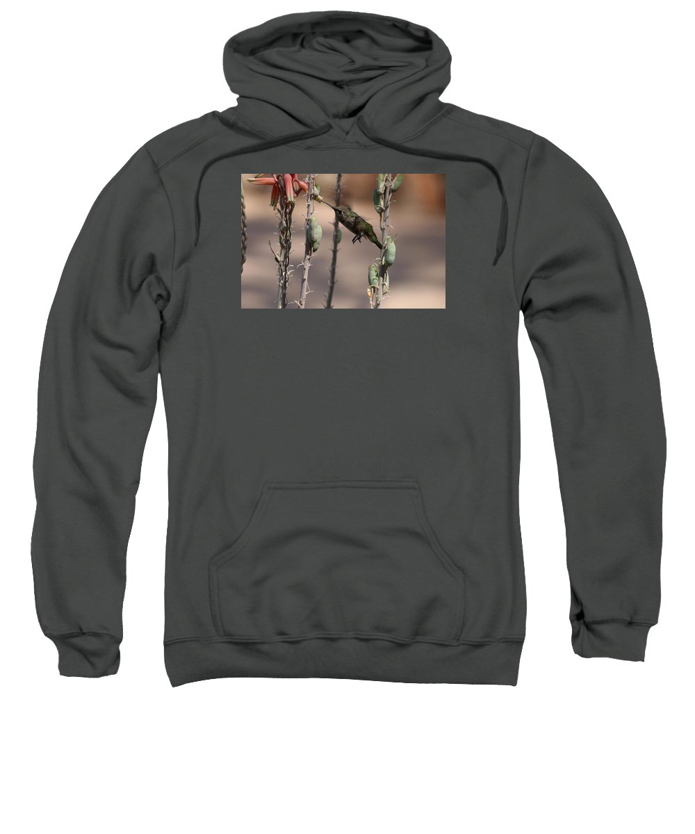 Hummingbird Sweatshirt featuring the photograph Female Anna's Hummingbird by Christiane Schulze Art And Photography
