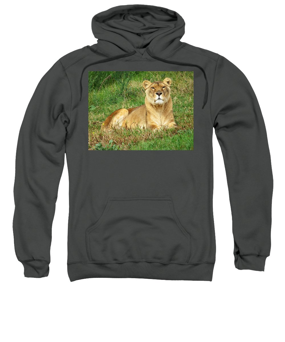 Lion Sweatshirt featuring the photograph Female Lioness Lying On The Grass In The Afternoon Sun by Jessica Foster