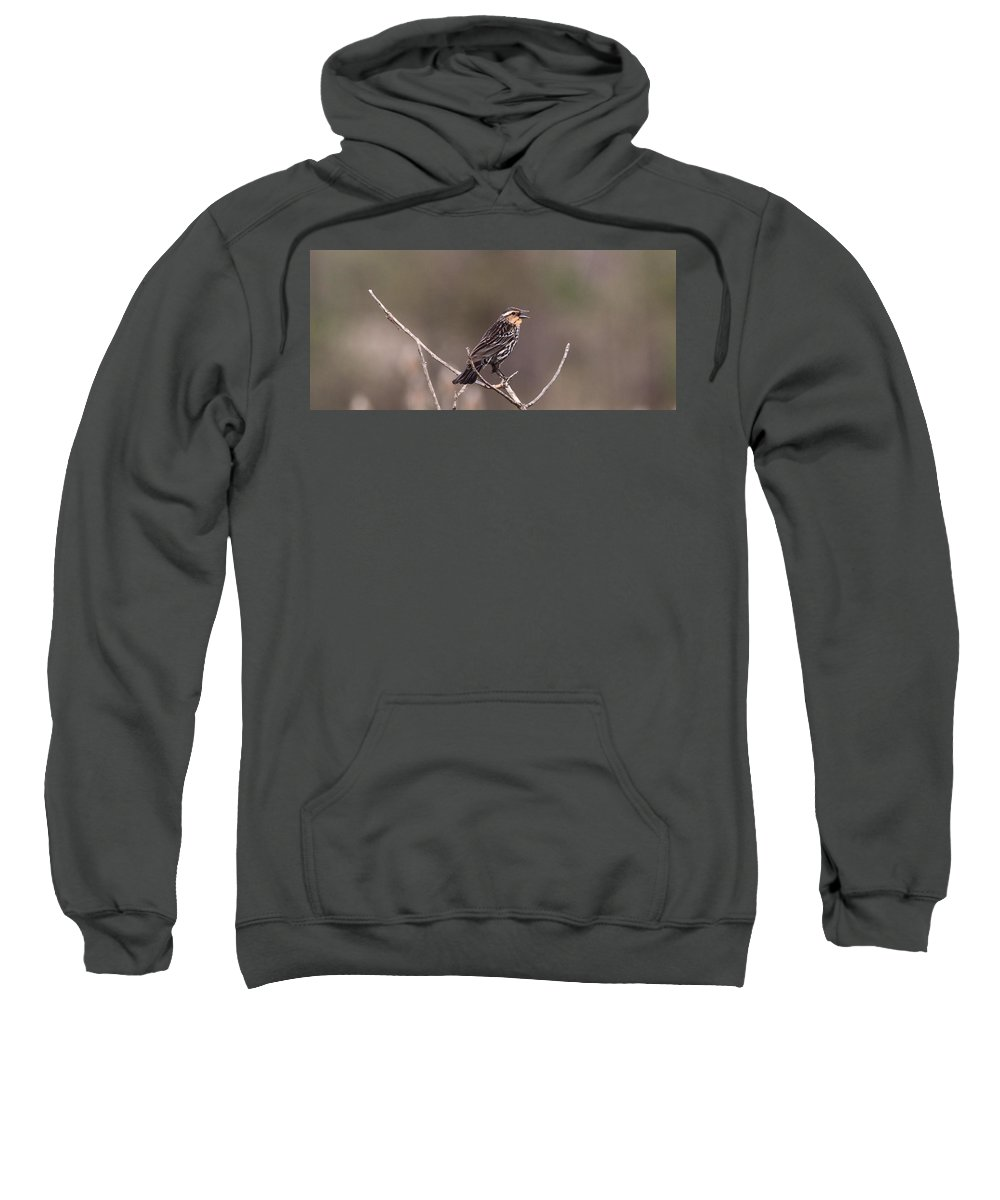 Female Red Winged Blackbird Singing Sweatshirt featuring the photograph Female Red Winged Blackbird Singing by Dan Sproul