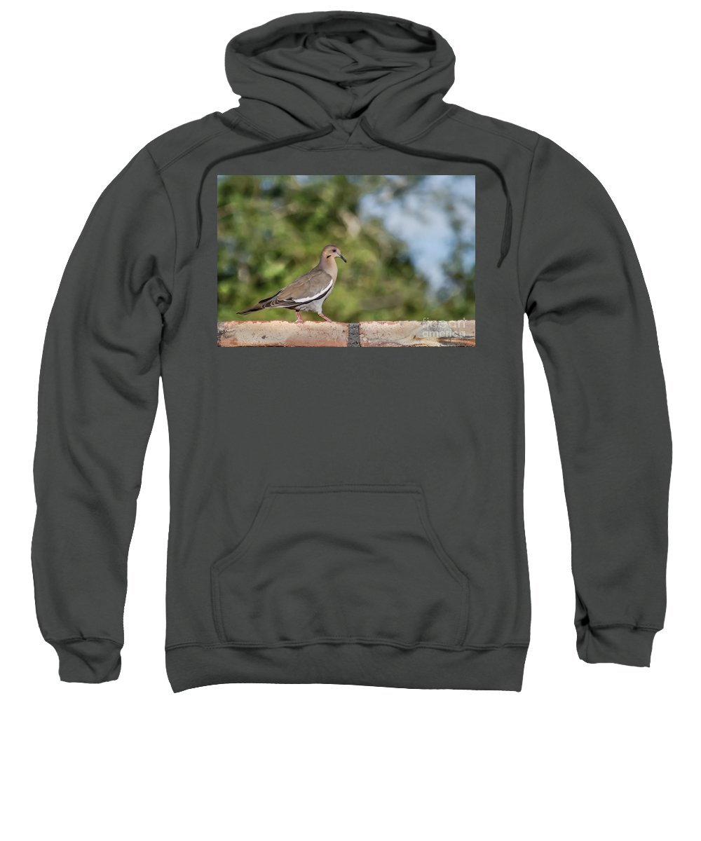 Morning Dove Sweatshirt featuring the photograph Fence Walker by Robert Bales