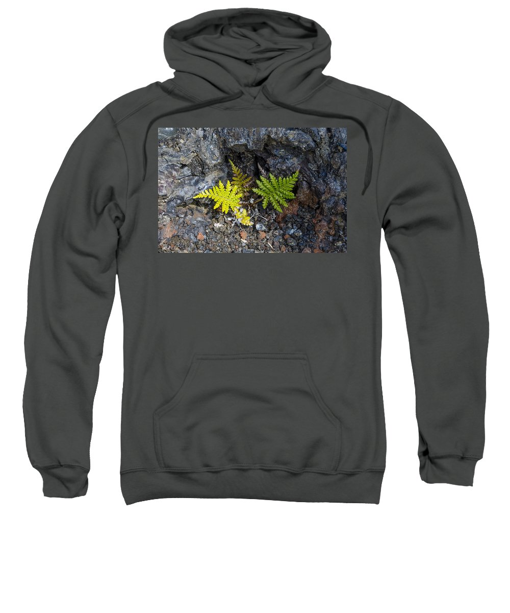 Ferns Sweatshirt featuring the photograph Ferns In Volcanic Rock by Daniel Murphy