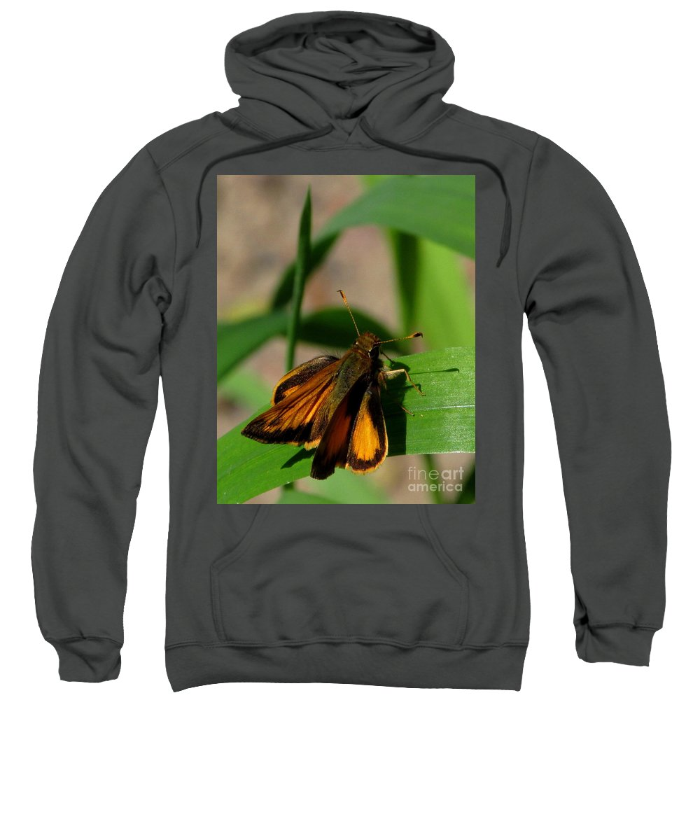 Firey Skipper Butterfly North American Butterfly Species Small Orange And Black Butterfly Invertebrates Sweatshirt featuring the photograph Fire Skipper by Joshua Bales