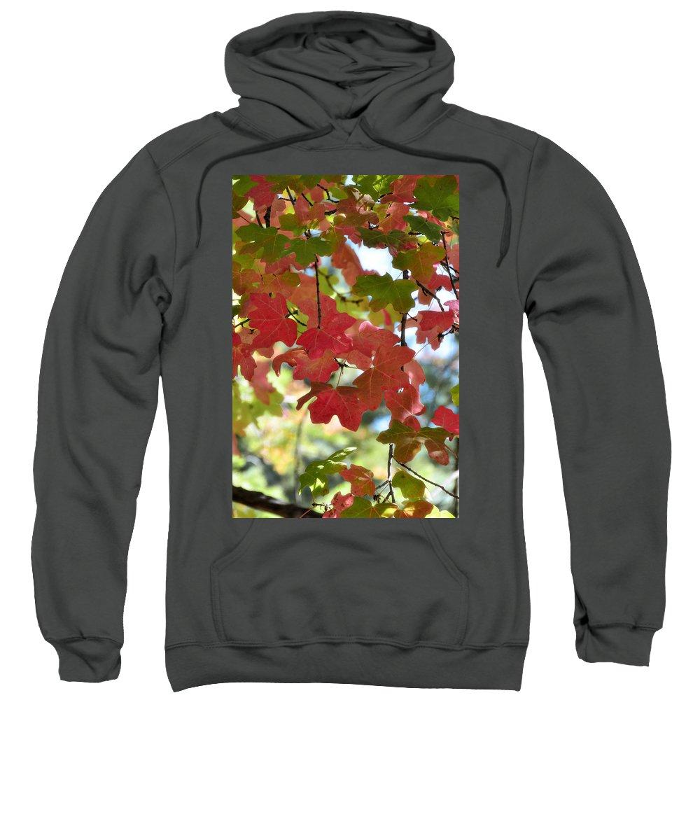 Fall Foliage Sweatshirt featuring the photograph First Signs Of Fall by Saija Lehtonen