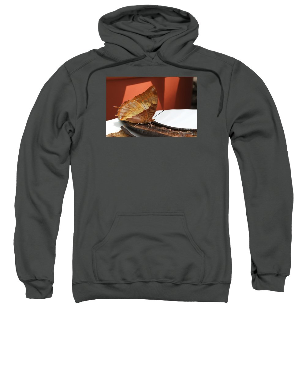 Butterfly Sweatshirt featuring the photograph Flame-bordered Charaxes Butterfly #2 by Judy Whitton