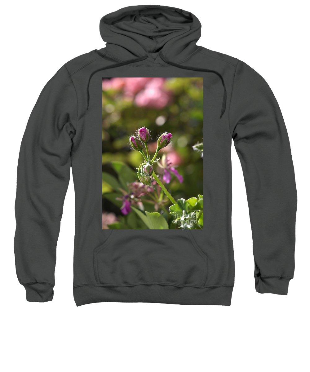 Flower Sweatshirt featuring the photograph Flower-geranium Buds by Joy Watson