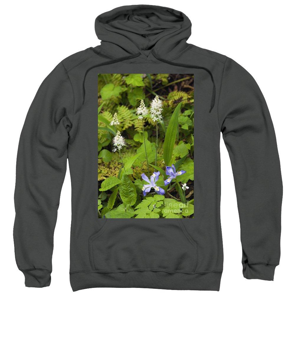 Tiarella Sweatshirt featuring the photograph Foamflower And Crested Dwarf Iris - D008428 by Daniel Dempster