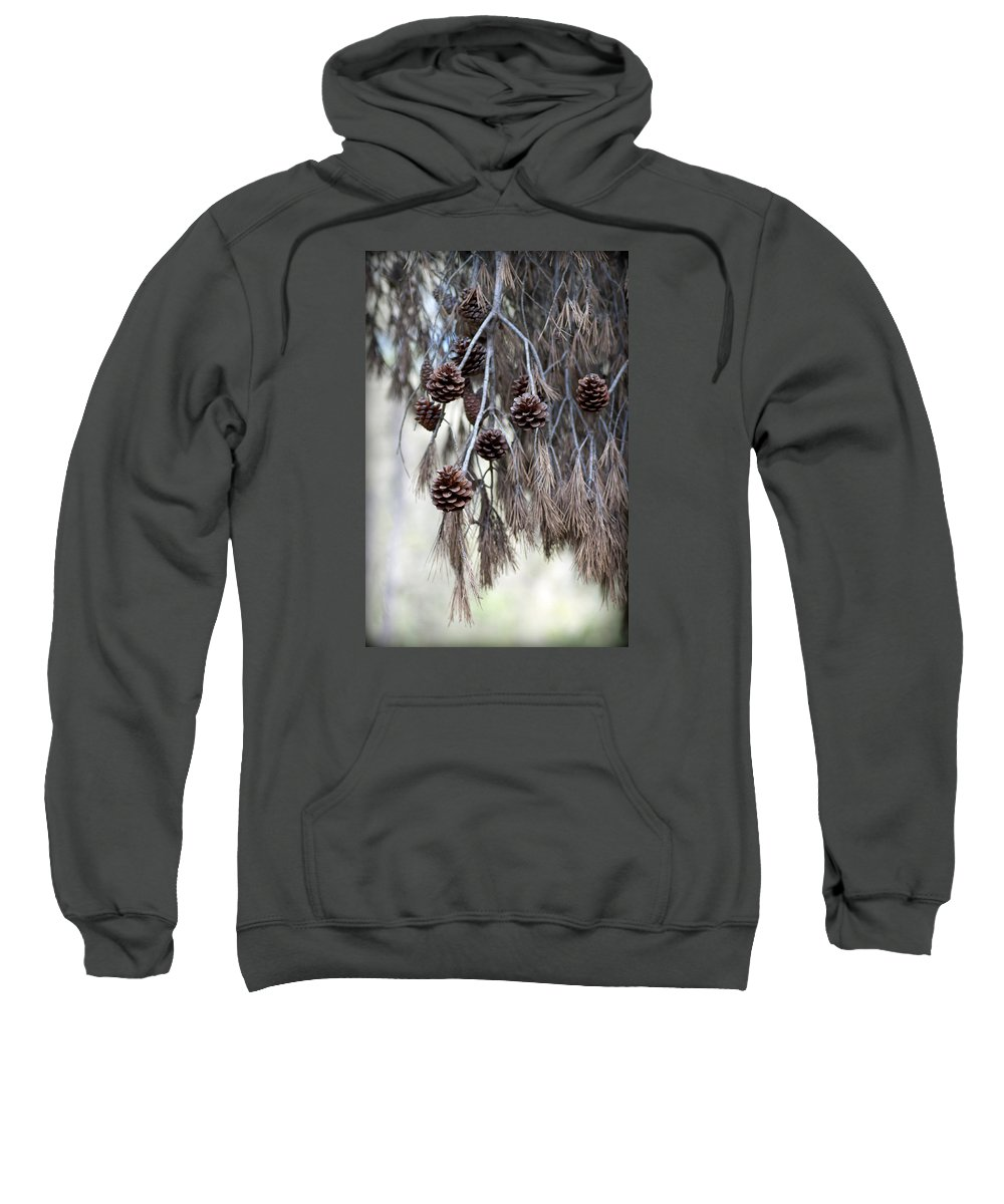 Menorca Sweatshirt featuring the photograph forest decoration - A pine tree give us a natural autumn decoration by Pedro Cardona Llambias
