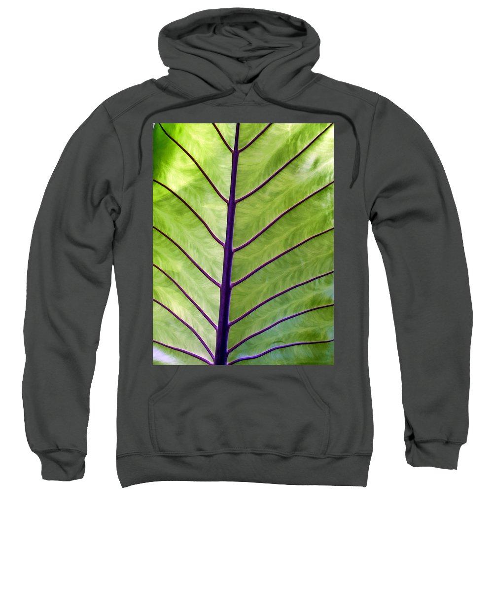 Leaf Sweatshirt featuring the photograph Four Seasons 89 by Dawn Eshelman