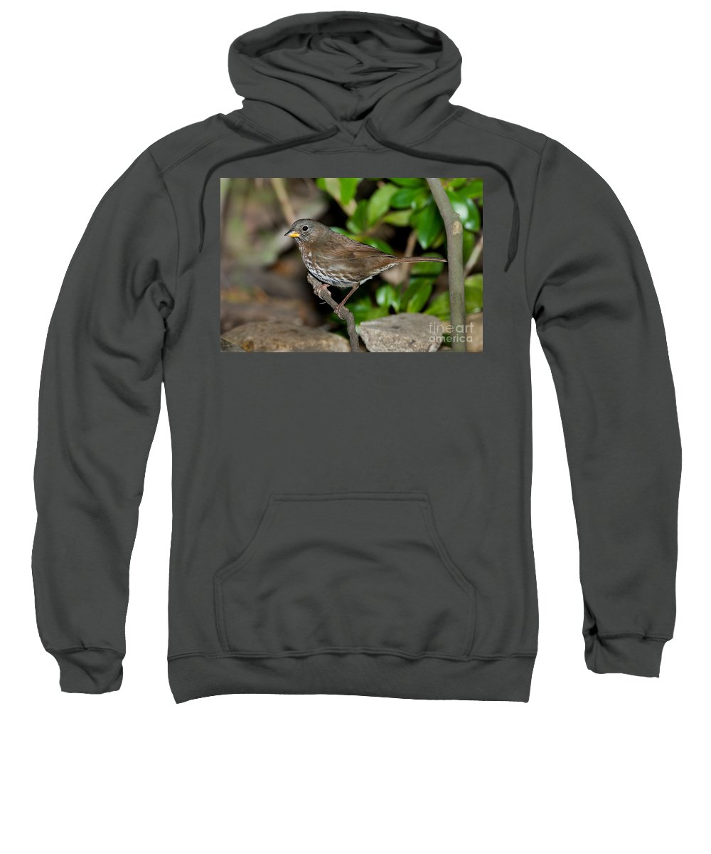 Fox Sparrow Sweatshirt featuring the photograph Fox Sparrow by Anthony Mercieca