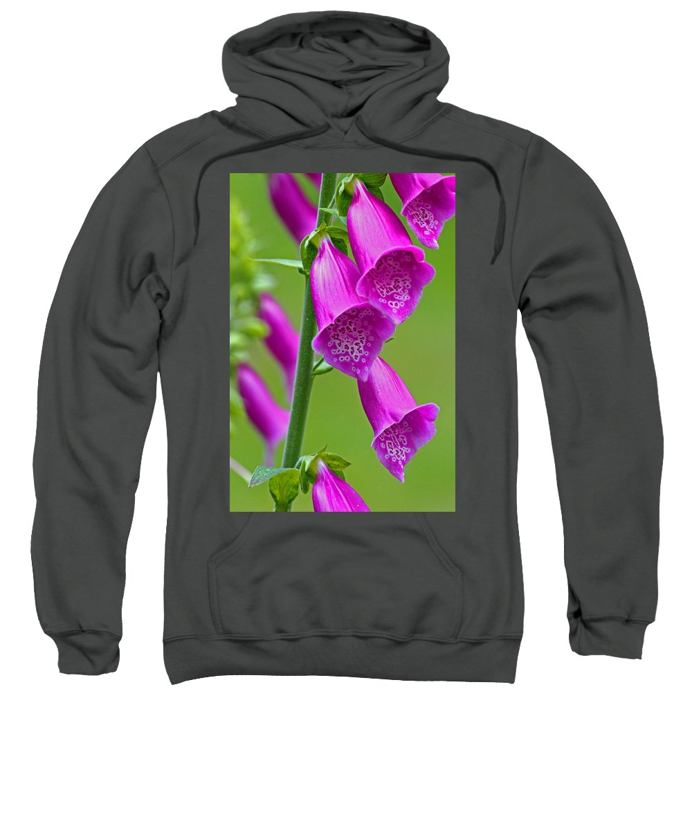 Foxglove Sweatshirt featuring the photograph Foxglove Digitalis Purpurea by Tony Murtagh