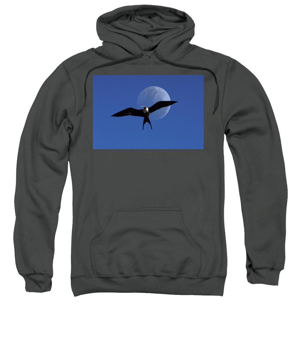 Frigate Sweatshirt featuring the photograph Frigatebird Moon by Jerry McElroy