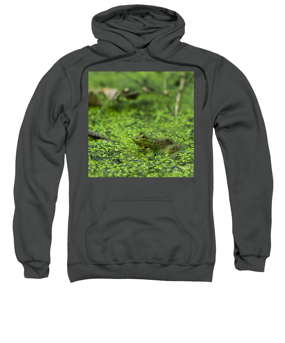 Frog Sweatshirt featuring the photograph Frog In Swamp 2 Of 3 by Brad Marzolf Photography