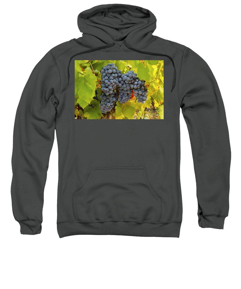 Saignon Sweatshirt featuring the photograph Fruit Of The Vine Imagine The Wine by Bob Phillips