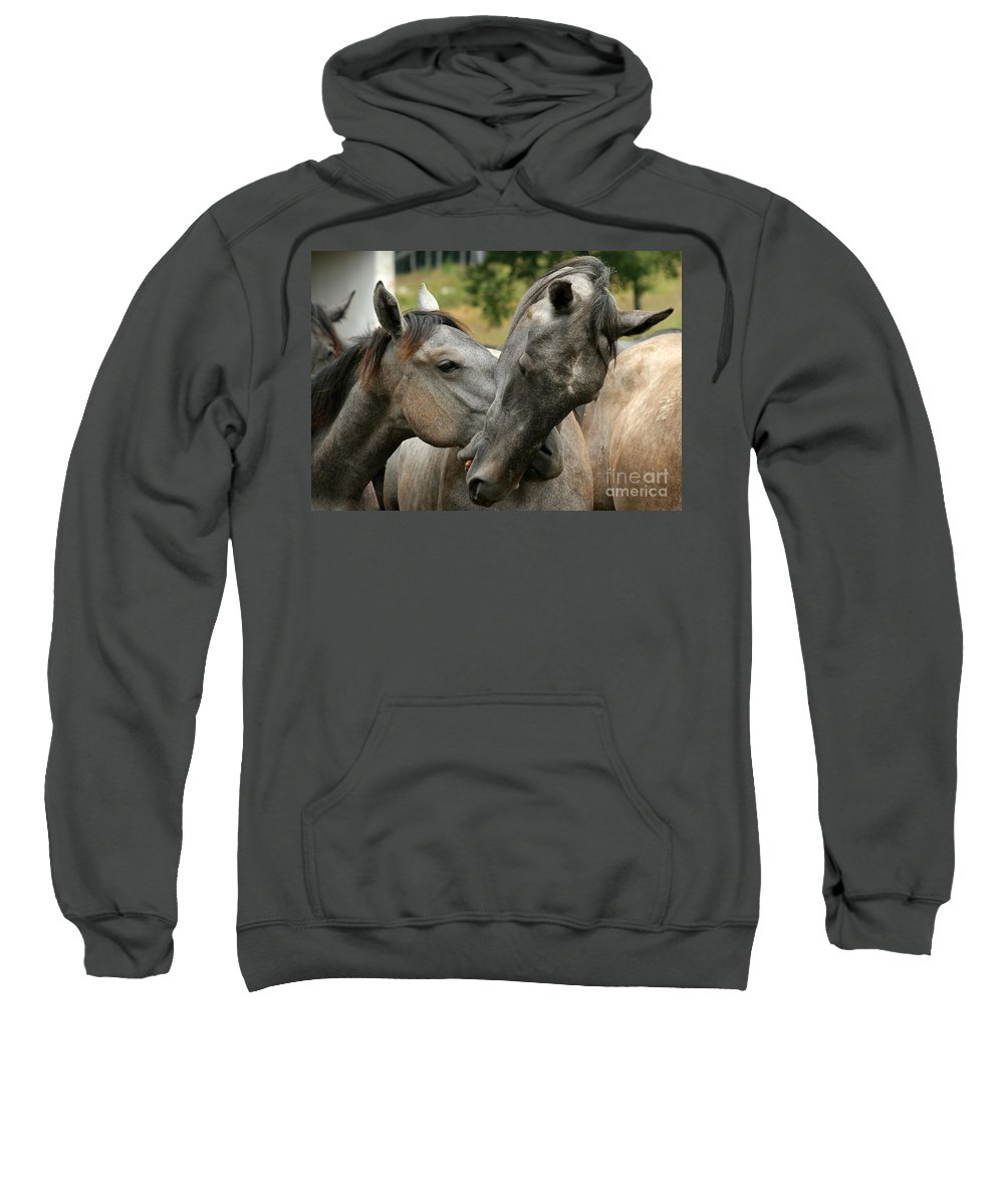 Horse Sweatshirt featuring the photograph Funny Horses by Angel Ciesniarska