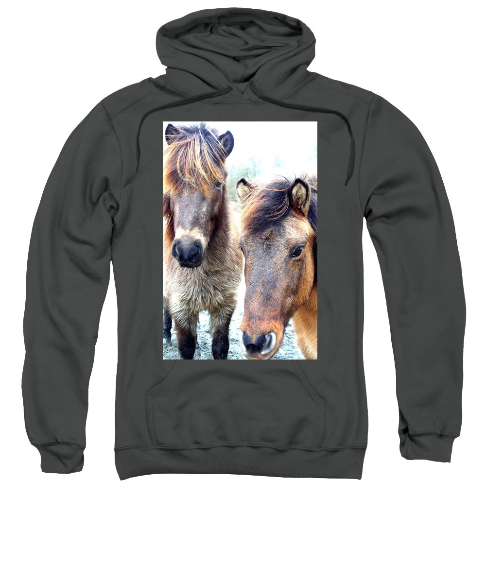 Family Sweatshirt featuring the photograph We Were The Most Furry Friends by Hilde Widerberg