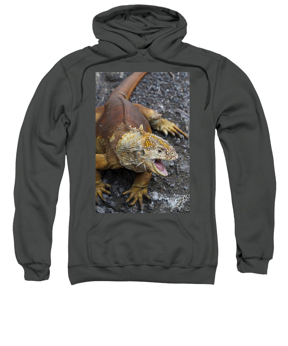 Galapagos Land Iguana Sweatshirt featuring the photograph Galapagos Land Iguana by Jason O Watson