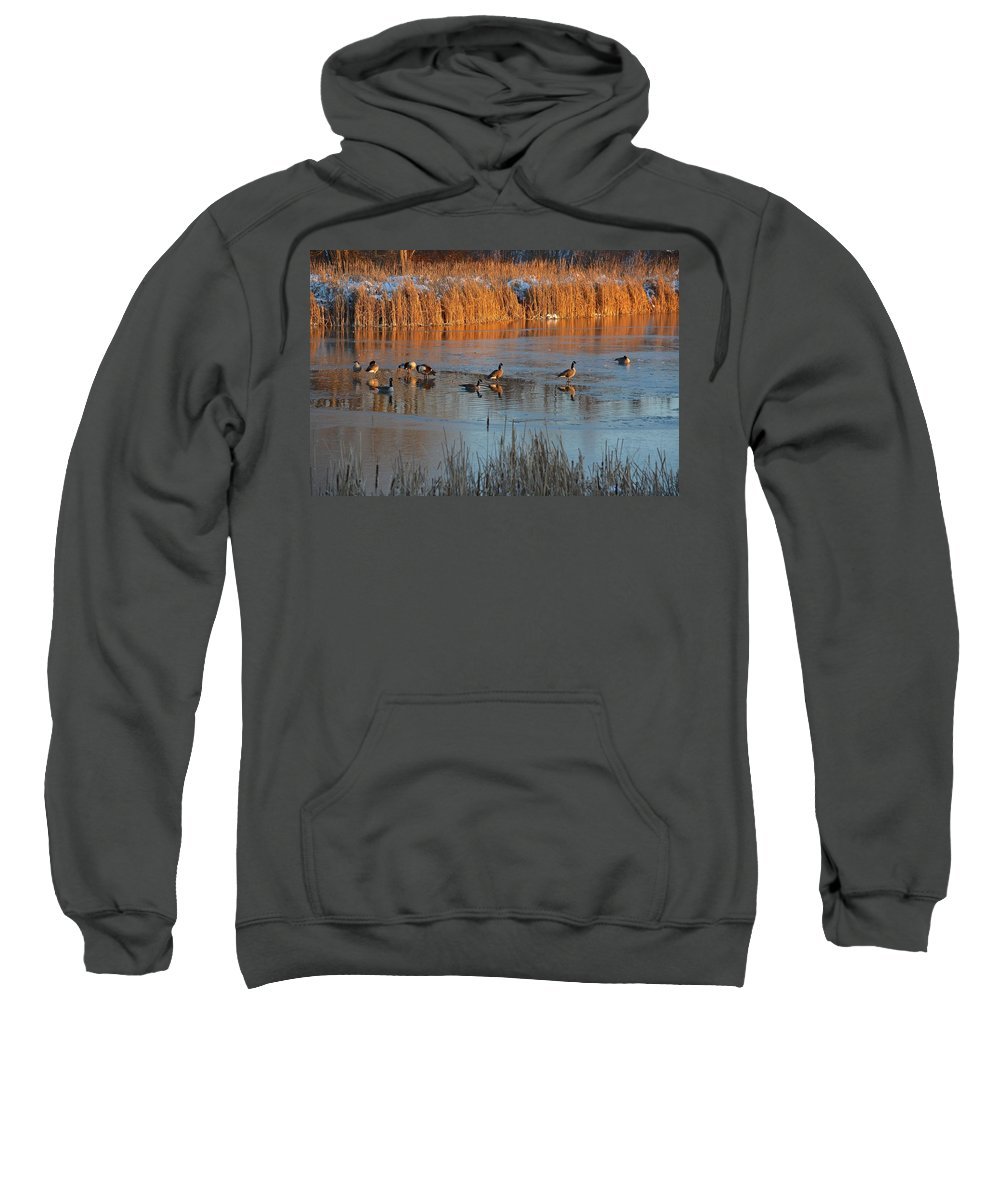 Geese Sweatshirt featuring the photograph Geese In Wetlands by Tana Reiff