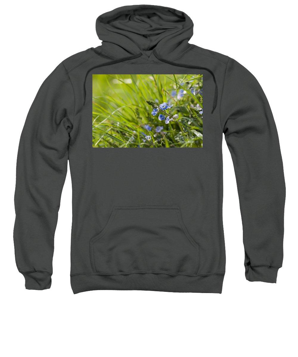 Back Sweatshirt featuring the photograph Germander Speedwell by Anne Gilbert