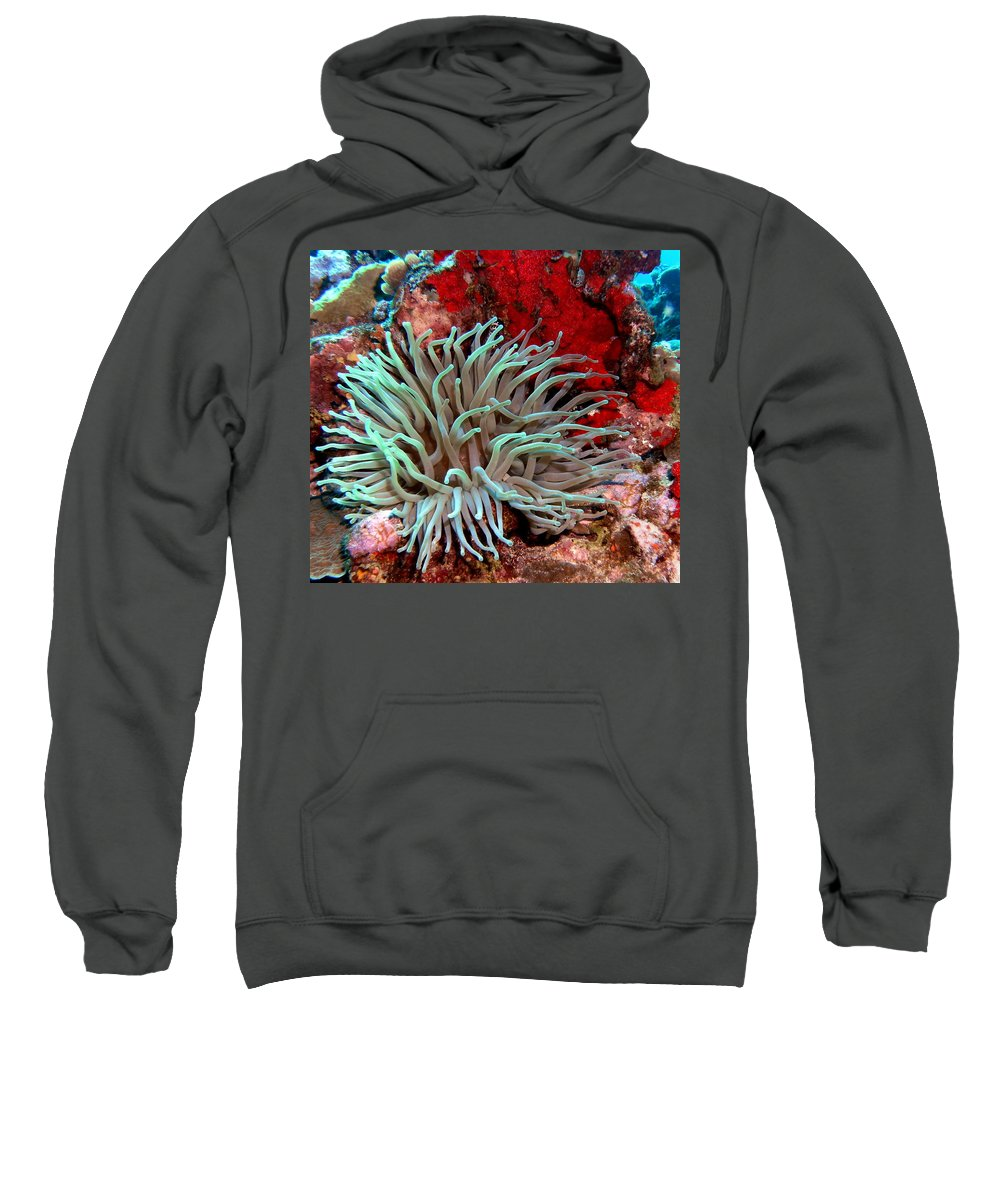 Nature Sweatshirt featuring the photograph Giant Green Sea Anemone Against Red Coral by Amy McDaniel