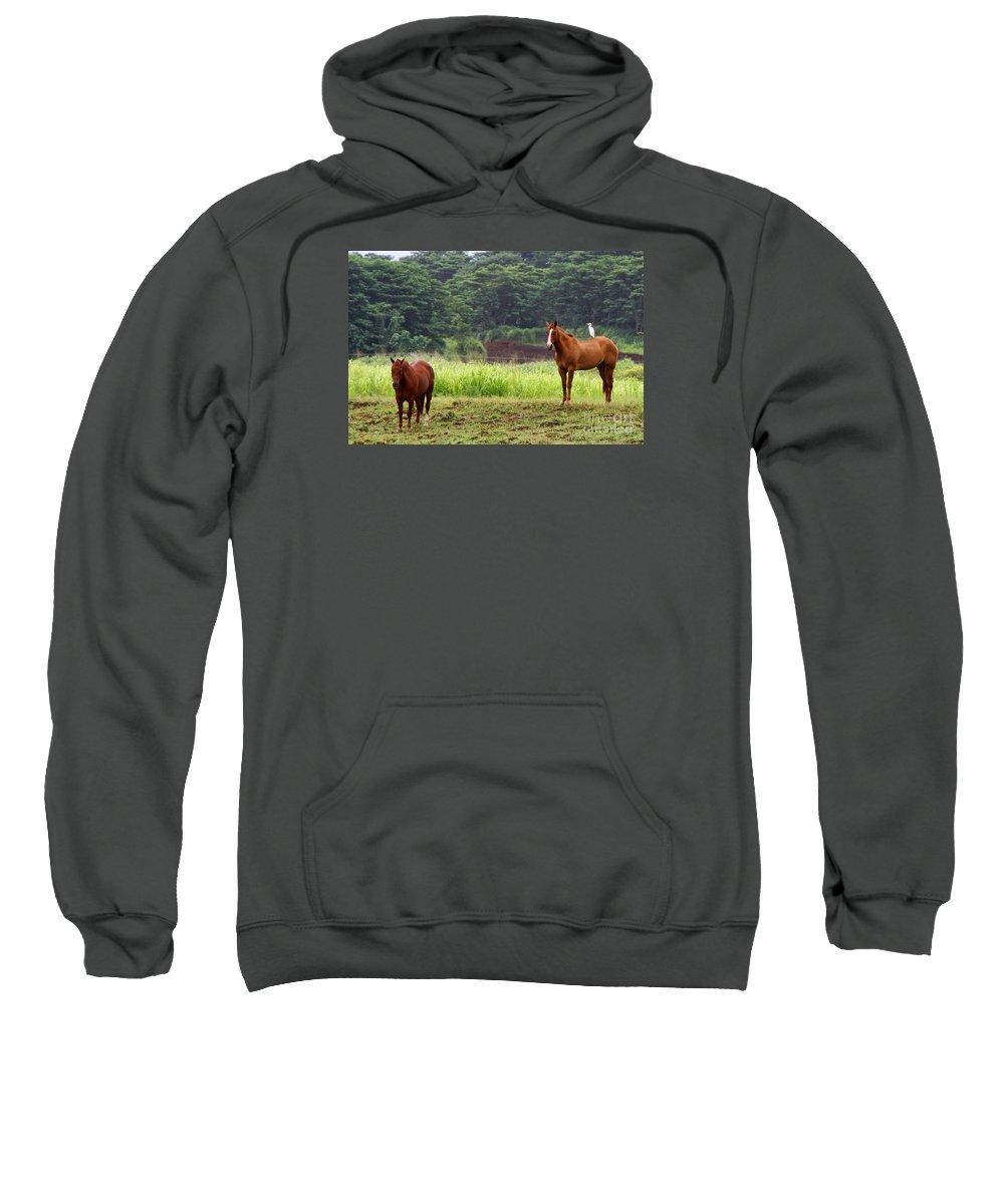 Horse Sweatshirt featuring the photograph Giddy Up Horsy By Diana Sainz by Diana Raquel Sainz