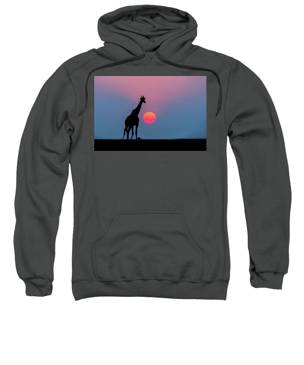 Nis Sweatshirt featuring the photograph Giraffe At Sunset Chobe Np Botswana by Andrew Schoeman