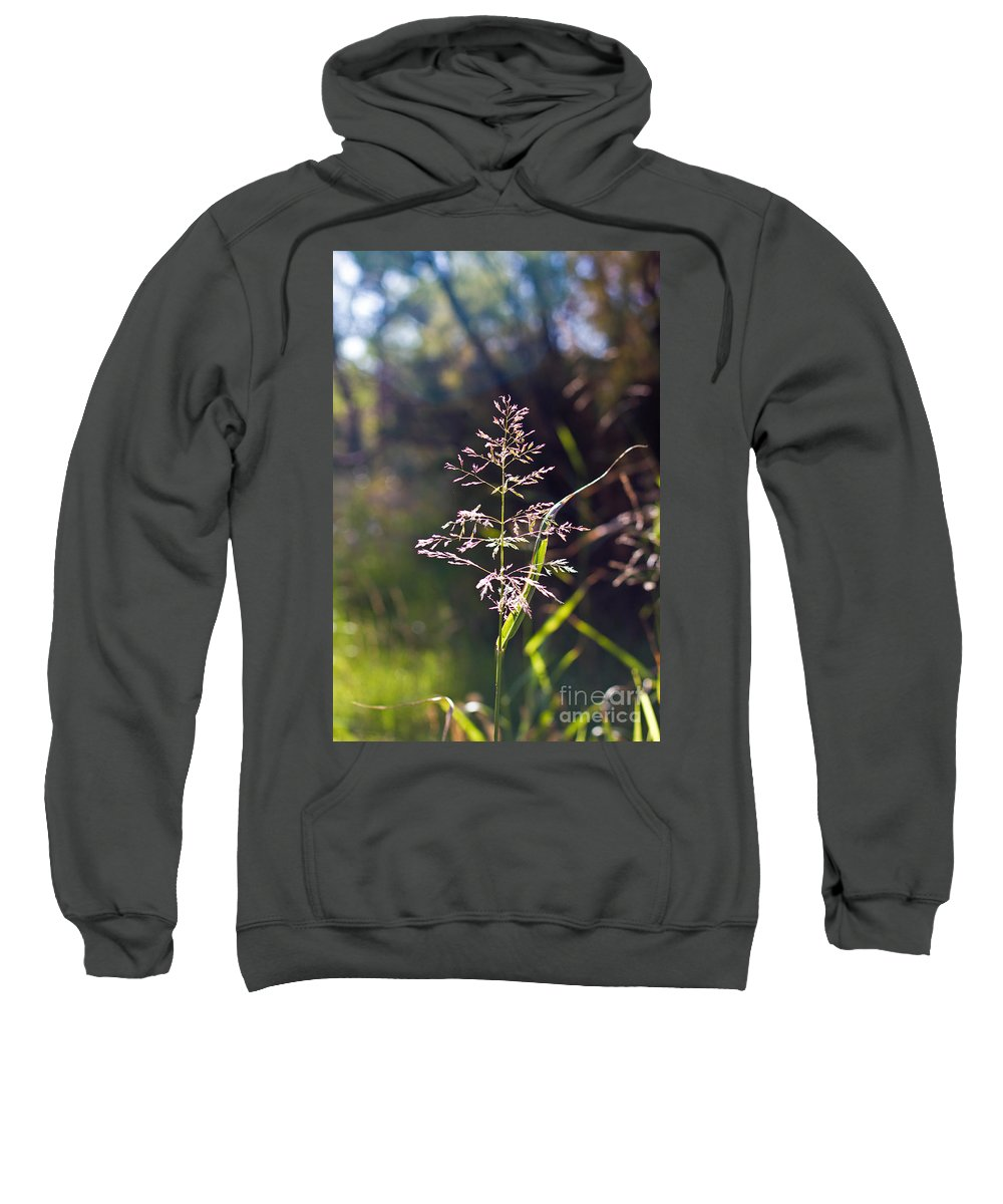Texas Sweatshirt featuring the photograph Glowing Grass In Palo Duro Canyon 100613.02 by Ashley M Conger
