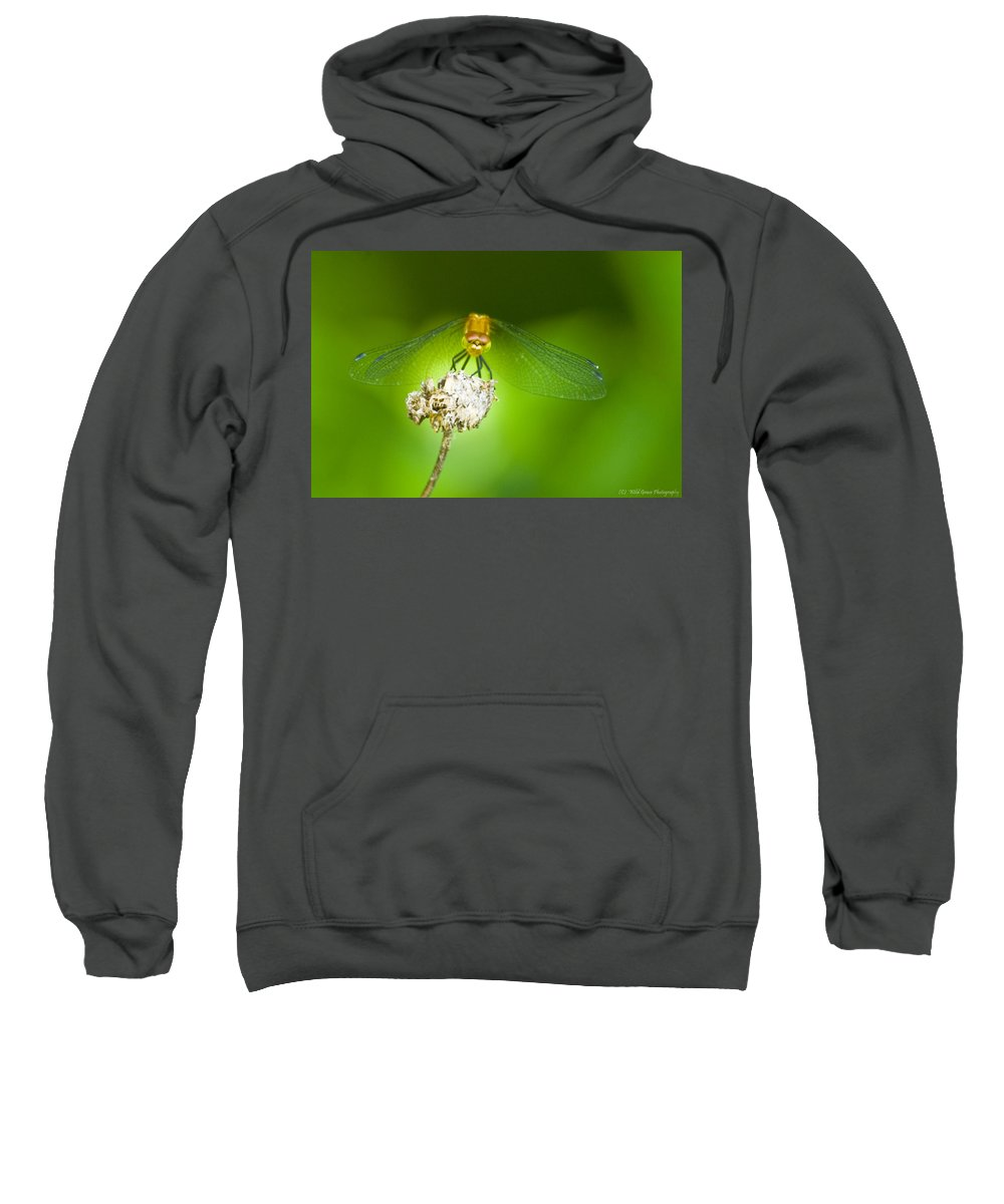 Dragonfly Photographs Sweatshirt featuring the photograph Golden Dragonfly On Perch by Crystal Heitzman Renskers