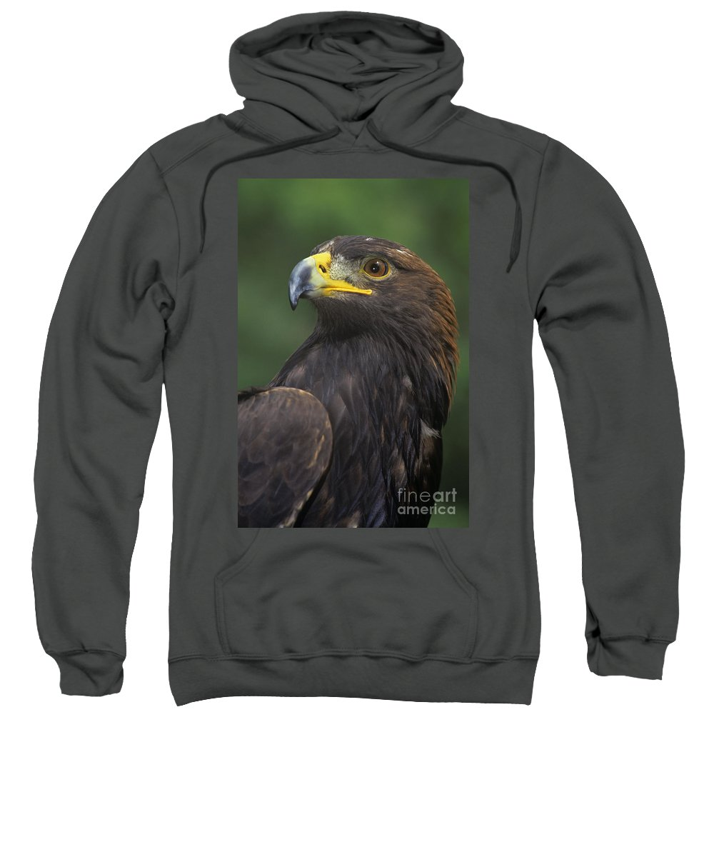 Golden Eagle Sweatshirt featuring the photograph Golden Eagle Portrait Threatened Species Wildlife Rescue by Dave Welling